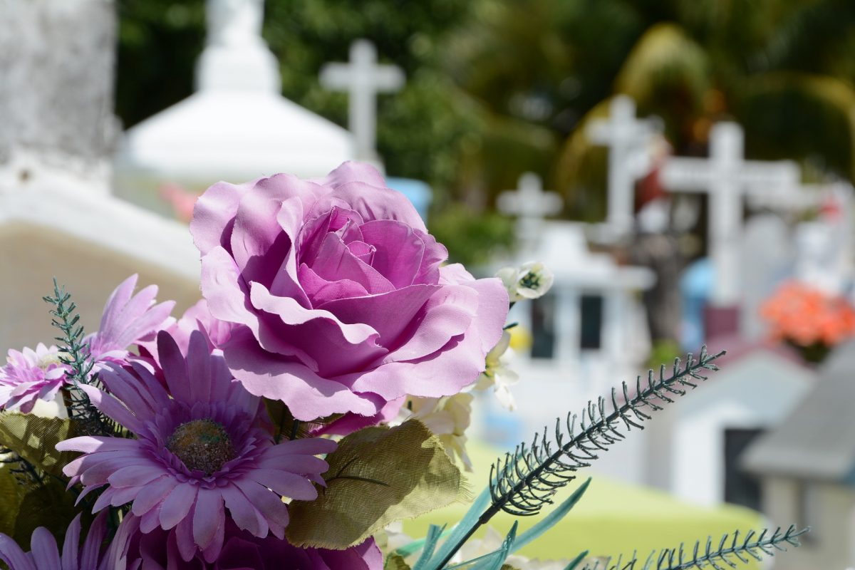 A pair of violet flowers with a graveyard backdrop